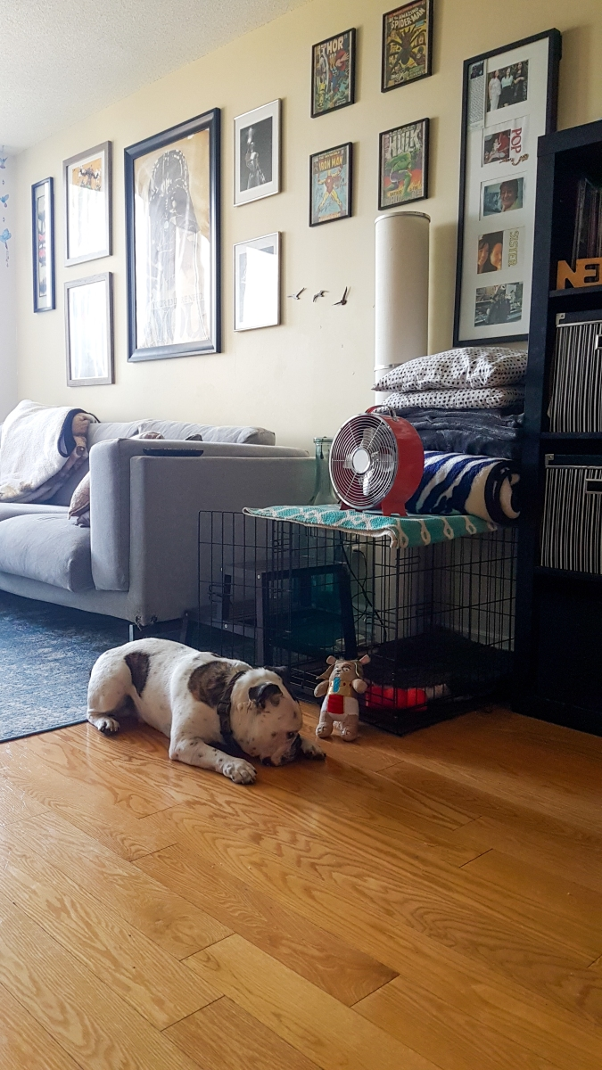 Styling: Dog Crate