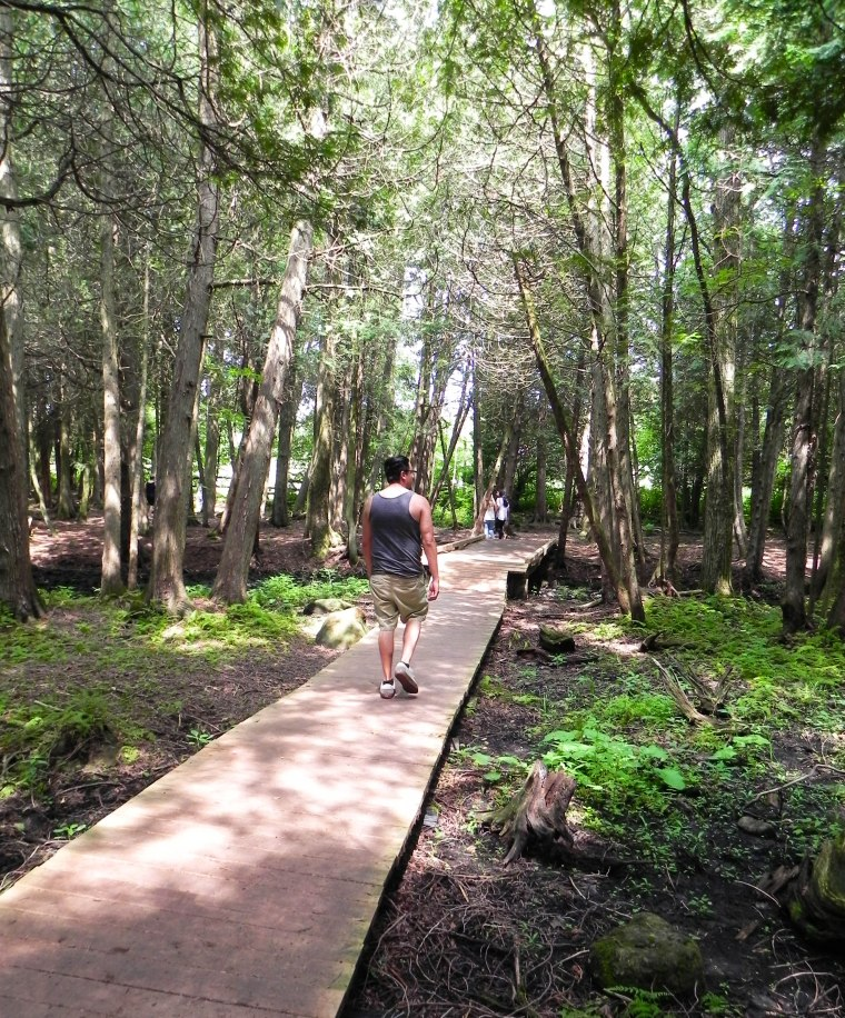 TerreBleu_Forest_Explore (1 of 1)